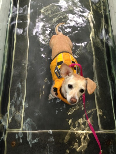 Lucy on the underwater treadmill.