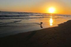 Lucas Huntington Dog Beach