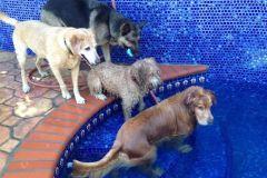 Balou's Pool
